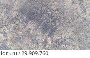 Купить «Aerial view of winter forest covered with snow», видеоролик № 29909760, снято 18 января 2019 г. (c) Михаил Коханчиков / Фотобанк Лори