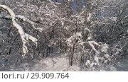Купить «Beautiful snow winter forest, slider dolly shot», видеоролик № 29909764, снято 17 января 2019 г. (c) Михаил Коханчиков / Фотобанк Лори