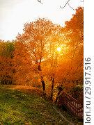 Купить «Autumn and yellow maple leaves in the park in Kolomenskoye park in autumn season aerial view, Moscow, Russia», фото № 29917516, снято 8 декабря 2019 г. (c) Mikhail Starodubov / Фотобанк Лори