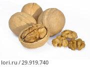 Купить «Грецкие орехи на белом фоне», фото № 29919740, снято 18 октября 2018 г. (c) Елена Коромыслова / Фотобанк Лори