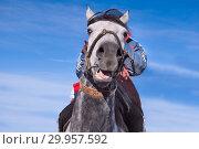 Купить «Horse muzzle. The horse hangs over the photographer.», фото № 29957592, снято 26 октября 2013 г. (c) Валерий Тырин / Фотобанк Лори