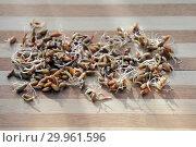 Купить «Пророщенные зерна ржи на деревянной поверхности», фото № 29961596, снято 9 апреля 2018 г. (c) Татьяна Белова / Фотобанк Лори