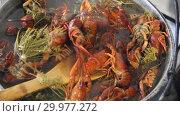 Купить «Crayfish boil in a pot. Cooking crayfish with dill and salt.», видеоролик № 29977272, снято 24 октября 2018 г. (c) Олег Хархан / Фотобанк Лори