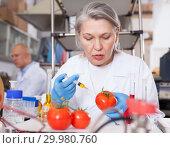 Купить «Female geneticist injecting additives into tomatoes», фото № 29980760, снято 24 января 2019 г. (c) Яков Филимонов / Фотобанк Лори