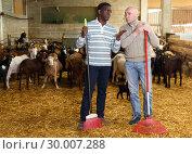 Купить «Workers discussing on goat farm», фото № 30007288, снято 15 декабря 2018 г. (c) Яков Филимонов / Фотобанк Лори
