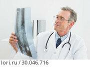 Купить «Doctor looking at xray picture of spine in office», фото № 30046716, снято 4 октября 2013 г. (c) Wavebreak Media / Фотобанк Лори