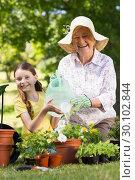 Купить «Happy grandmother with her granddaughter gardening», фото № 30102844, снято 17 ноября 2014 г. (c) Wavebreak Media / Фотобанк Лори