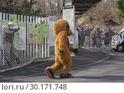 Купить «February 22, 2019, Tokyo, Japan - A zookeeper wearing orangutan costume tries to escape while zookeepers hold up a net in an attempt to capture it during...», фото № 30171748, снято 22 февраля 2019 г. (c) age Fotostock / Фотобанк Лори