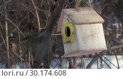 Купить «A group of yellow tits birds is flying to a feeder house from plywood and flying out in the park», видеоролик № 30174608, снято 23 февраля 2019 г. (c) Татьяна Куклина / Фотобанк Лори