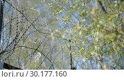 Купить «Prison landscape with barbed wire (fence) against the background of birches and sky», видеоролик № 30177160, снято 23 февраля 2019 г. (c) Mikhail Erguine / Фотобанк Лори