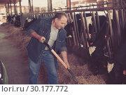 Купить «Adult farmer is standing at her workplace and feeding cows», фото № 30177772, снято 24 октября 2017 г. (c) Яков Филимонов / Фотобанк Лори