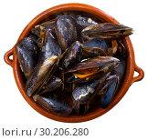 Купить «Gourmet steamed mussels», фото № 30206280, снято 22 марта 2019 г. (c) Яков Филимонов / Фотобанк Лори