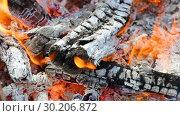 Купить «Closeup of a warm fire burning in a campfire», видеоролик № 30206872, снято 24 апреля 2019 г. (c) FotograFF / Фотобанк Лори