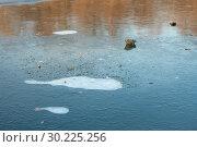 Купить «На пруду разноцветный лед: темно-синий с белыми яркими пятнами и коричнево-красными отражениями. В лед вмерзли сухие осенние листья», фото № 30225256, снято 13 ноября 2018 г. (c) Наталья Николаева / Фотобанк Лори