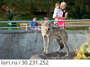 Купить «Волк (Canis lupus). Московский зоопарк», эксклюзивное фото № 30231252, снято 25 сентября 2015 г. (c) Щеголева Ольга / Фотобанк Лори