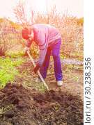 Купить «A young man in a country plot digs the ground to plant a tomato.», фото № 30238356, снято 4 мая 2016 г. (c) Акиньшин Владимир / Фотобанк Лори