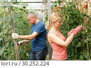Купить «Couple of farmers cultivating tomatoes», фото № 30252224, снято 5 июля 2018 г. (c) Яков Филимонов / Фотобанк Лори