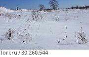 Купить «Сухая трава. Февраль. Ветрено», видеоролик № 30260544, снято 6 марта 2019 г. (c) Александр Романов / Фотобанк Лори