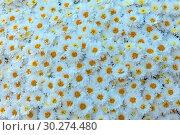 Купить «Цветочный фон из белых хризантем», фото № 30274480, снято 17 сентября 2018 г. (c) Татьяна Белова / Фотобанк Лори