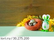 Купить «Easter festive background. Easter bunnies and Easter eggs in the nest near the mimosa flowers, Easter card», фото № 30275200, снято 27 февраля 2018 г. (c) Зезелина Марина / Фотобанк Лори