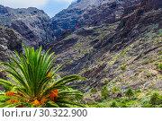 Купить «Fabulous Masca mountain gorge the most visited tourist attraction on Tenerife», фото № 30322900, снято 13 сентября 2015 г. (c) Ирина Мойсеева / Фотобанк Лори