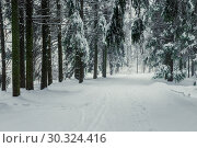 Купить «Forest road snow-covered after a snowstorm, beautiful landscape in the forest», фото № 30324416, снято 4 февраля 2018 г. (c) Константин Лабунский / Фотобанк Лори