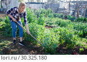 Купить «Young woman weeds with a hoe the garden bed», фото № 30325180, снято 28 февраля 2019 г. (c) Яков Филимонов / Фотобанк Лори
