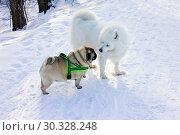 Купить «Две домашних собаки встретились на прогулке в парке», фото № 30328248, снято 13 марта 2019 г. (c) Людмила Капусткина / Фотобанк Лори