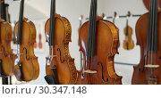 Купить «Музыкальные инструменты на открытии Всероссийской выставки скрипичных мастеров в Шереметевском дворце - Музее музыки, Санкт-Петербург», видеоролик № 30347148, снято 18 марта 2019 г. (c) Stockphoto / Фотобанк Лори