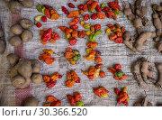 Купить «Stanll detail,tamarind, potatoes,peppers, food market of Ambohimahasoa city, Madagascar.», фото № 30366520, снято 24 июня 2019 г. (c) age Fotostock / Фотобанк Лори