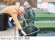 Купить «Owner of sturgeon farm with worker inspecting fish», фото № 30367488, снято 4 февраля 2018 г. (c) Яков Филимонов / Фотобанк Лори