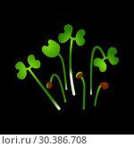 Microgreens Chinese Cabbage. Bunch of plants. Black background. Стоковая иллюстрация, иллюстратор Юлия Фаранчук / Фотобанк Лори