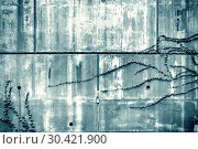 Купить «Black and white of old wall.», фото № 30421900, снято 8 апреля 2015 г. (c) easy Fotostock / Фотобанк Лори