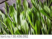 Купить «Ramsons, wild garlic, Siberian onion, top view», фото № 30436092, снято 18 марта 2019 г. (c) Oksana Zh / Фотобанк Лори