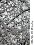 Россия. Природа зимой Russia. Nature in winter. Стоковое фото, фотограф Светлана Федорова / Фотобанк Лори