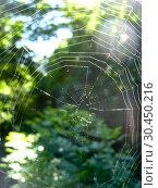 Spider's web on the green background. Стоковое фото, фотограф Александр Птах / Фотобанк Лори