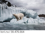 Купить «Polar bear among the ices near the frozen sea», фото № 30476664, снято 18 марта 2019 г. (c) Наталья Волкова / Фотобанк Лори