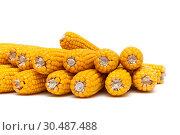 Купить «Mature corn isolated on white background», фото № 30487488, снято 9 октября 2015 г. (c) Ласточкин Евгений / Фотобанк Лори
