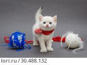 Купить «White British kitten in red scarf», фото № 30488132, снято 18 декабря 2018 г. (c) Okssi / Фотобанк Лори