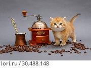 Купить «Red British kitten and coffee», фото № 30488148, снято 18 декабря 2018 г. (c) Okssi / Фотобанк Лори