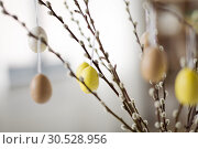 Купить «close up of pussy willow decorated by easter eggs», фото № 30528956, снято 22 марта 2018 г. (c) Syda Productions / Фотобанк Лори