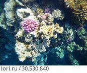 Купить «Coral reef», фото № 30530840, снято 17 октября 2008 г. (c) Tryapitsyn Sergiy / Фотобанк Лори