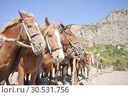 Купить «Brown horses on ranch», фото № 30531756, снято 11 сентября 2010 г. (c) Tryapitsyn Sergiy / Фотобанк Лори