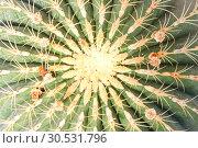 Купить «Green cactus surface», фото № 30531796, снято 10 сентября 2010 г. (c) Tryapitsyn Sergiy / Фотобанк Лори