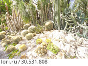 Купить «Green cactuses», фото № 30531808, снято 10 сентября 2010 г. (c) Tryapitsyn Sergiy / Фотобанк Лори