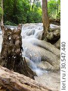 Купить «Tropical tree roots and water», фото № 30547440, снято 16 декабря 2013 г. (c) Tryapitsyn Sergiy / Фотобанк Лори