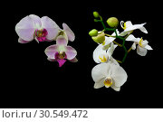 Купить «Different flowers of orchids on a black background», фото № 30549472, снято 19 мая 2014 г. (c) Ласточкин Евгений / Фотобанк Лори