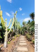 Купить «Cacti in the garden», фото № 30553032, снято 20 июля 2015 г. (c) Tryapitsyn Sergiy / Фотобанк Лори