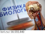 Купить «Анатомический макет головы человека на общеобразовательной выставке», фото № 30555840, снято 12 апреля 2019 г. (c) Николай Винокуров / Фотобанк Лори