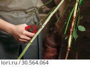 Florist hands cutting flower stalk. Стоковое фото, фотограф Tryapitsyn Sergiy / Фотобанк Лори
